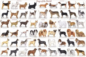 All dog breeds